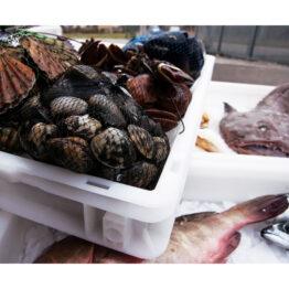 Cajas plásticas calidad alimentaria Minerva