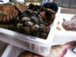 sector-alimentario-dissetodiseo_0003s_0007_cajas plasticas calidad alimentaria